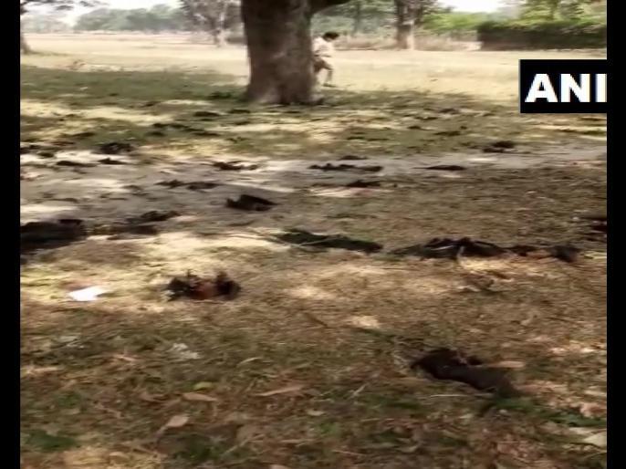Gorakhpur:Bats found dead in Belghat, 52 carcasses of bats were found.3 of them sent to IVRI Bareilly for post-mortem. | Uttar Pradesh: गोरखपुर में 52 चमगादड़ों की मौत, इलाके के लोगों को कोरोना वायरस संक्रमण का शक