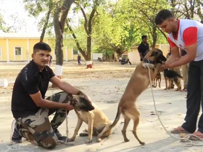 Belgian Malinois dogs was a part of the team that eliminated Osama bin Laden, has been inducted in Madhya Pradesh Police Dog Squad | ओसामा बिन लादेन को मारने में था इन कुत्तों का हाथ, अब भारत में करेंगे ये काम