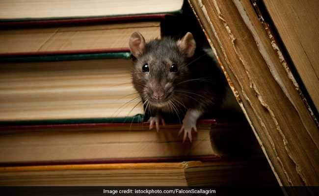 lok sabha election 2019 RLD candidate from Mathura raises question on safety of EVMs from rats. | प्रत्याशीका दावा,स्ट्रांगरूम में रखी ईवीएम को चूहों से खतरा, अधिकारियों ने मना किया