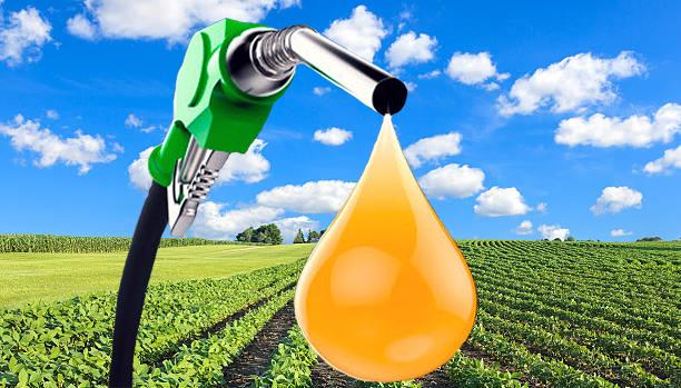 Oil marketing companies to procure biodiesel from used cooking oil | फेंकना बंद करें खाना बनाने के बाद बचा तेल, बॉयोडीजल बनाने में होगा इस्तेमाल, 100 शहरों में शुरुआत