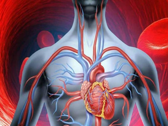surprising facts about human body 50 Amazing Facts About the Human Body | ओ तेरी की! नसों की लंबाई होती है 1 लाख किलोमीटर, शरीर से जुड़ीं ये 50 बातें अंदर तक हिला देंगी