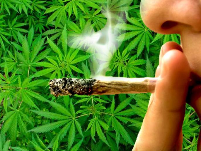 study find cannabis or marijuana may cause of heart attack, chest pain and myocardial ischemia | गांजा से युवाओं को चेस्ट पेन और हार्ट अटैक का खतरा, सीमित सेवन से हैं ये 3 फायदे