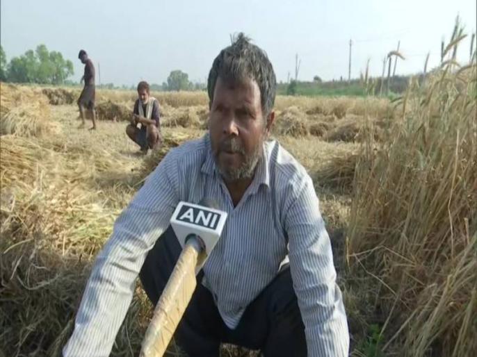 Bihar: Farmers in Patna are harvesting their crops amid COVID-19 lockdown | Coronavirus: लॉकडाउन के कारण खुद फसल काटने को मजबूर हैं किसान, परिजनों संग कर रहे काम
