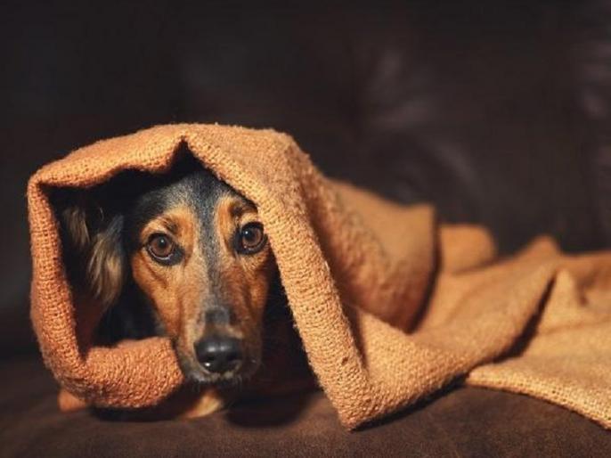 Thane dog burnt alivepolice registered a case against unknown people crime case | ठाणेःलावारिस कुत्ते को जिंदा जलाया,पुलिस ने अज्ञात लोगों के खिलाफ मामला दर्ज
