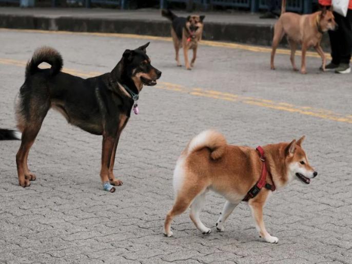 Nagaland bans dog meat after uproar on internet | नगालैंड सरकार ने कुत्ते के मीट की बिक्री पर लगाई रोक, मिजोरम ने मार्च में लगाया था बैन