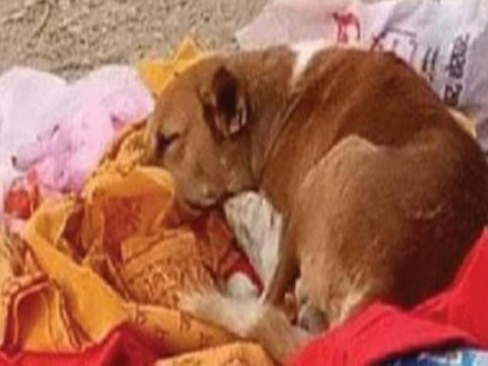 Loyal dog sitting hungry and thirsty on the cremation ground for 4 days in bihar   बिहार: मालकिन की मौत के 4 दिनों तक श्मशान घाट पर भूखा-प्यासा बैठा रहा वफादार कुत्ता, स्वामिभक्ति देख लोग भी हैरान