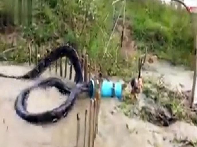 50 feet giant snake stuck in big drum eyes opened wide video goes viral | VIDEO: ड्रम में फंसा इतना बड़ा सांप कि देखकर उड़ गए सबके होश, जानें आखिर क्या है पूरा मामला