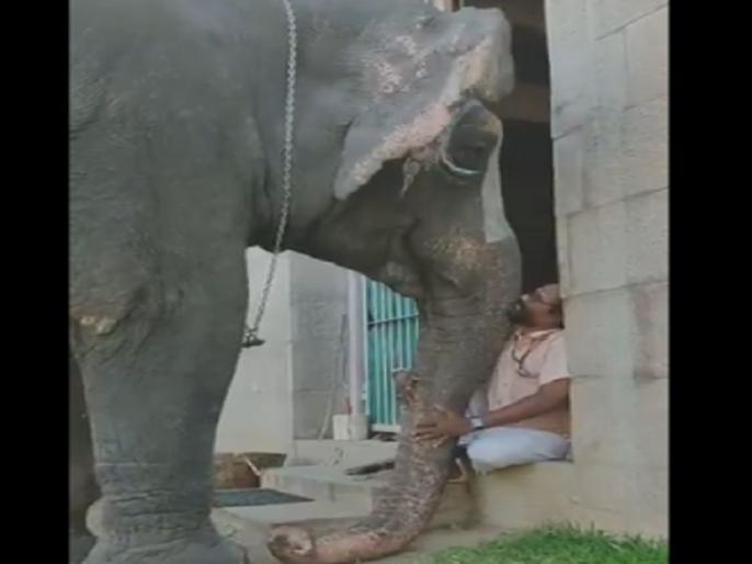 Elephant complaining about people taking her pics to mahout viral video | फोटो खींच रहे तो लोग तो महावत के पास जाकर शिकायत करने लगी हथिनी, देखें वायरल वीडियो