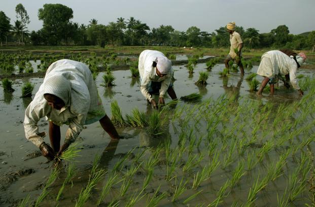 Prime Minister Crop Insurance Scheme completes 5 years, every year 5.5 crore farmers across the country apply for the benefit of this scheme | प्रधानमंत्री फसल बीमा योजना के 5 वर्ष पूरे, हर साल देश भर के 5.5 करोड़ किसान इस योजना के लाभ के लिए करते हैं आवेदन