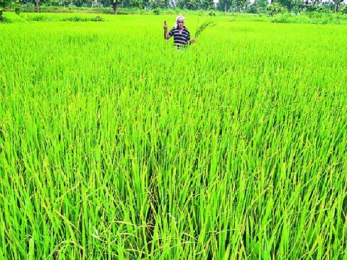 farmers can check his name in pm kisan samman nidhi scheme online | PM Kisan Samman Nidhi Scheme: किसानों को 2000 रुपये की पहली किस्त जारी, ऑनलाइन ऐसे चेक करें अपना नाम