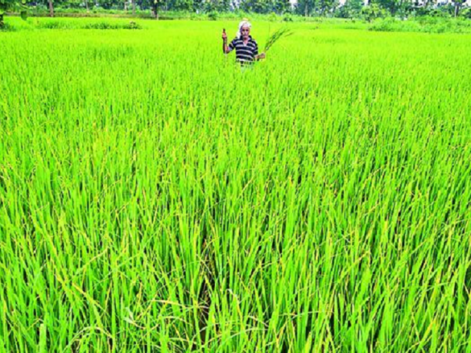 Narendra modi government: Comprehensive reforms necessary for the salvation of farming | प्रकाश बियाणी का ब्लॉगः खेती के उद्धार के लिए व्यापक सुधार जरूरी