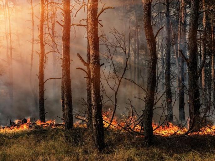 Maharashtra4321 forest fire incidents in four months third in the country mumbai   महाराष्ट्रमें चार महीनों में हुईं 4321 वनों में आग की घटनाएं,देशभर में तीसरे स्थान पर