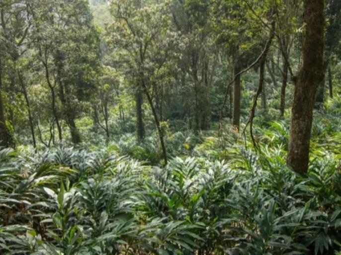 india's forest cover marginally increases over last 2 years   कटते वनों की कौन लेगा सुध, क्षेत्रफल में हुआ इजाफा पर चिंता अभी बरकरार, पढ़ें आंकड़ा
