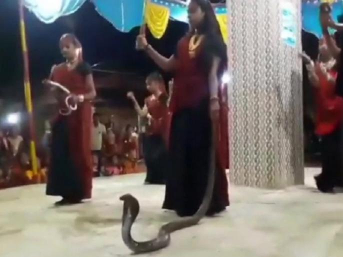 Garba holding cobras event two women and one girl arrested | गुजरात: हाथ में सांप लेकर गरबा करने का वीडिया वायरल होने के बाद हरकत में वन विभाग, तीन गिरफ्तार