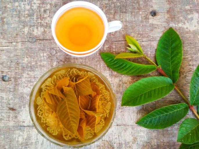 guava leaves benefits for diabetes, heart health, weight loss, treating diarrhea, fight cancer   डायबिटीज, कोलेस्ट्रॉल, गठिया, कैंसर, मोटापे का काल हैं इस फल के पत्ते, गर्म पानी में उबालकर पियें, 2 दिन में दिखेगा असर