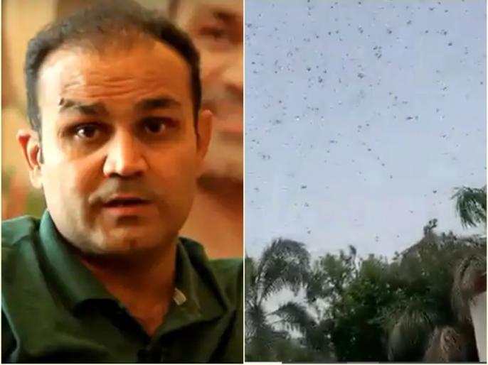 Former indian cricketer Virender Sehwag Shares Verified Locusts attack video   वीरेंद्र सहवाग के घर के ऊपर टिड्डी दल का 'हमला', खुद वीडियो शेयर कर लिखा...