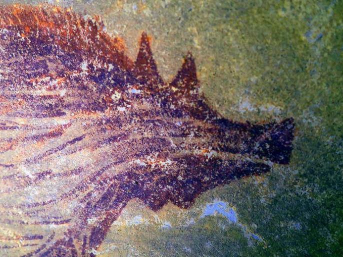 World's oldest painting of animals discovered in Indonesian caveleast 45500 yearsPigArchaeologists | इंडोनेशिया में गुफा के भीतर मिली दुनिया की सबसे पुरानी पेंटिंग,45500 साल पहले जंगली सुअर की जानकारी मिली