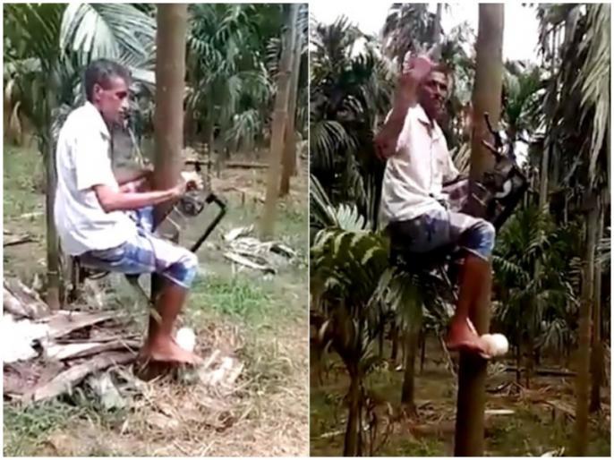 Farmer Creates Ingenious Device To Carry Him Up Trees To Pick Coconuts   वायरल हुआ चचा का जुगाड़, कुछ ही सेकेंड में नारियल के पेड़ पर चढ़ा देगी ये गाड़ी