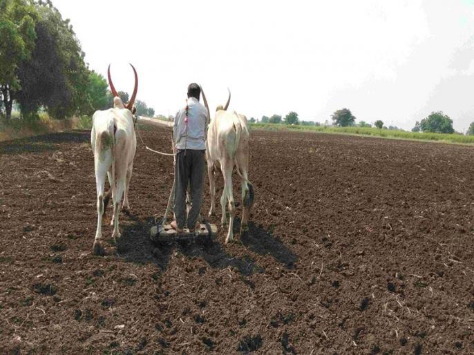 Chief Minister Shivraj Singh Chauhan Cabinet decided money lending of agricultural laborers will be forgiven | मध्यप्रदेश सरकार का बड़ा फैसला, सीमांत और किसानों के साथ ही कृषि मजदूरों का साहूकारी कर्ज होगा माफ