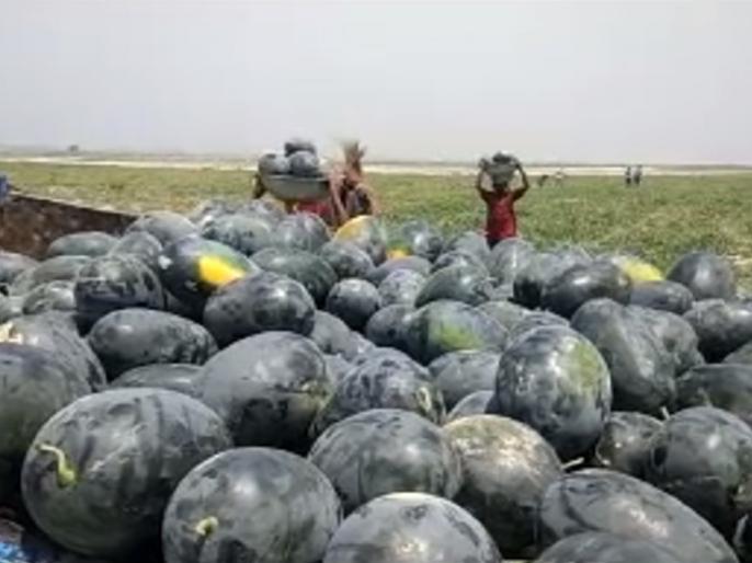 Bihar: farming of watermelon on sandy land of Koshi River | बिहार: शोक मानी जानेवाली कोसी नदी किसानों के लिए उपजा रही सोना, तरबूज की खेती से हो रहे हैं मालामाल