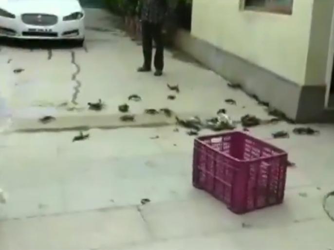 NCP workers protest threw crabs outside the residence of Maharashtra Minister Tanaji Sawant pune | वायरल वीडियो: मंत्री के घर के बाहर बोरे में भरकर लोगों ने छोड़े केकड़े, जानें वजह