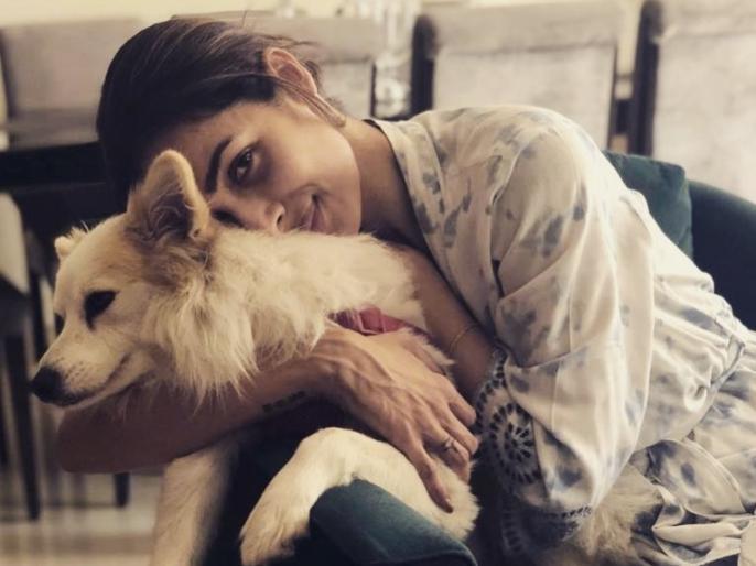 Arjun Kapoor comments on Malaika Arora latest photos | मलाइका अरोड़ा के 'शाही जाल' में फंस गए हैं अर्जुन कपूर, लेटेस्ट फोटो पर एक्टर ने किया कमेंट