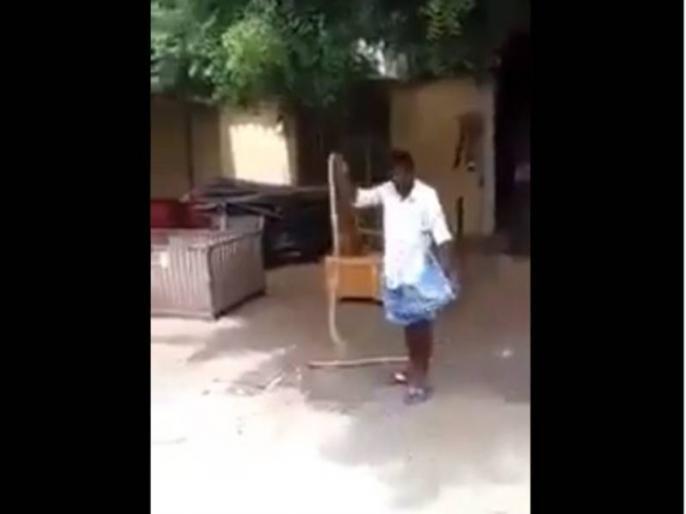 man was playing with poisonous snake and then put it in his lungi viral video watch it   आदमी ने देखते ही देखते सांप को उठाकर लुंगी में डाल लिया, आईएफएस ऑफिसर बोले- लुंगी है बड़े काम की चीज