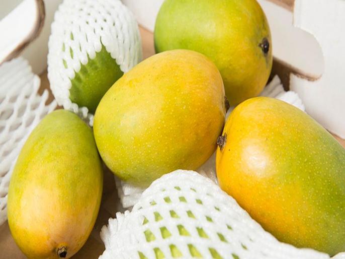 what is noorjahan fruit, type of mango, know its benefits and price in India   मौसम की मेहरबानी से मुस्कुरायी आमों की मलिका 'नूरजहां', 500 रूपये तक में बिकता है एक एक फल