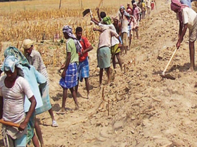 SC ST families are getting less representation in MGNREGA, more than 60 percent non SC-ST category | एससी-एसटी परिवारों को मनरेगा में मिल रहा है कम प्रतिनिधित्व, 60 प्रतिशत से भी ज्यादा गैर एससी-एसटी वर्ग