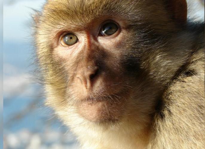 uttar pradesh man stoned to death by monkeys, family demands legal actions against monkeys   यूपी: बंदरों ने ईंट-पत्थर मारकर ली एक शख्स की जान, घरवाले करना चाहते हैं FIR, पुलिस इस वजह से कर रही है इनकार