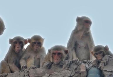 Ramnagar BJP president is feeding hungry monkeys in lockdown | लॉकडाउन में भूखे बंदरों को खाना खिला रहे हैं रामनगर के भाजपा अध्यक्ष