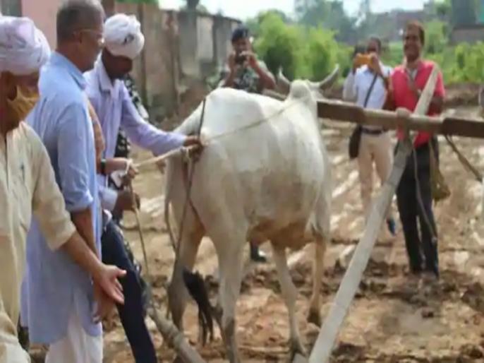 Film actor Nana Patekar reached Bihar for two days videos goes viral   बिहार के खेत में हल और बैल लेकर पहुंचे नाना पाटेकर, सैनिकों को बताया देश का असली हीरो