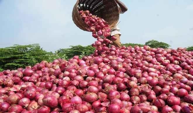 Onion price hike to Rs 100 per kg government reduces stock limit of onions | 100 रुपये किलो तक पहुंचा प्याज, अब भी राहत के आसार नहीं, सरकार ने घटाई स्टॉक लिमिट
