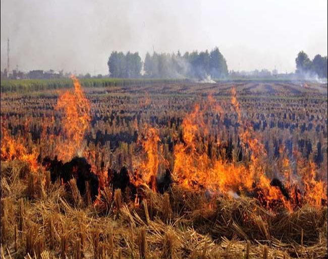 Nearly 3 thousand incidents of stubble burning were reported in Haryana and Punjab this year cpcb | सीपीसीबी रिपोर्ट में दावा- हरियाणा और पंजाब में इस साल पराली जलाने की करीब 3 हजार घटनाएं सामने आईं