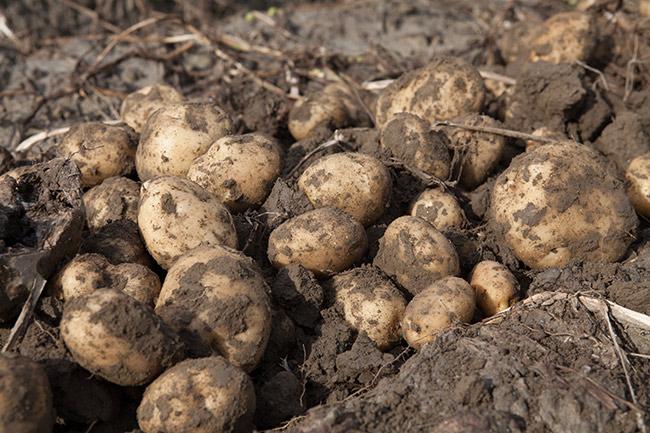 Wholesale Price Index Potato expensive onion cheap food manufactured products expensive inflation at 0.16 percent in August | थोक मूल्य सूचकांकः आलू महंगा, प्याज सस्ते,खाद्य, विनिर्मित उत्पाद महंगे होने से अगस्त में मुद्रास्फीति 0.16 प्रतिशत पर