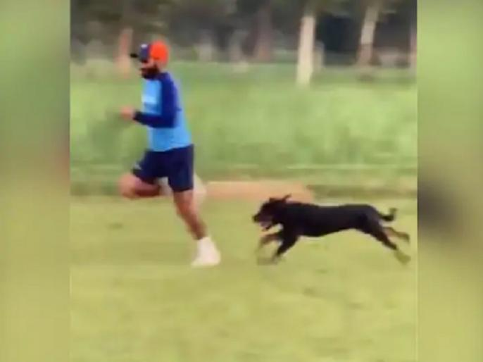 Mohammed Shami shares video of him Sprinting Alongside His Pet Dog | मोहम्मद शमी ने स्पीड सुधारने के लिए अपने कुत्ते के साथ लगाई रेस, वीडियो हुआ वायरल