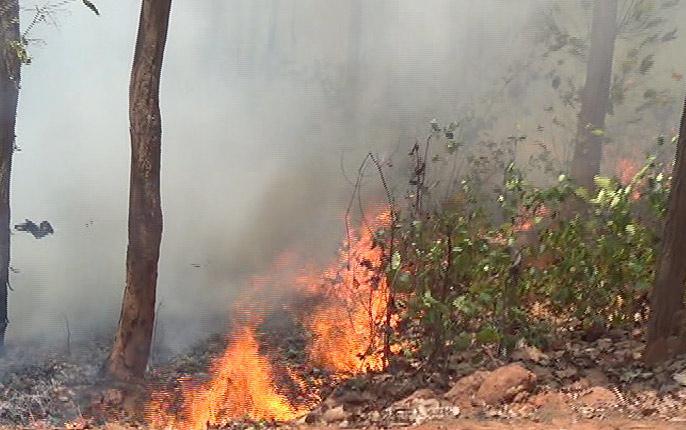 Simlipal National Park MayurbhanjOdisha8 ranges out of 21 ranges flameswildfire tiger reserve | सिमलीपाल नेशनल पार्कः 21 रेंजों में से 8 रेंज आग की चपेट में, जानें इसके बारे में