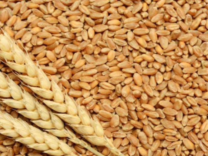 during coronavirus Government procurement of wheat crosses 314 million tonnes last year   कोरोना वायरस की चुनौतियों के बीच गेहूं की सरकारी खरीद पिछले साल के 3.413 करोड़ टन के पार
