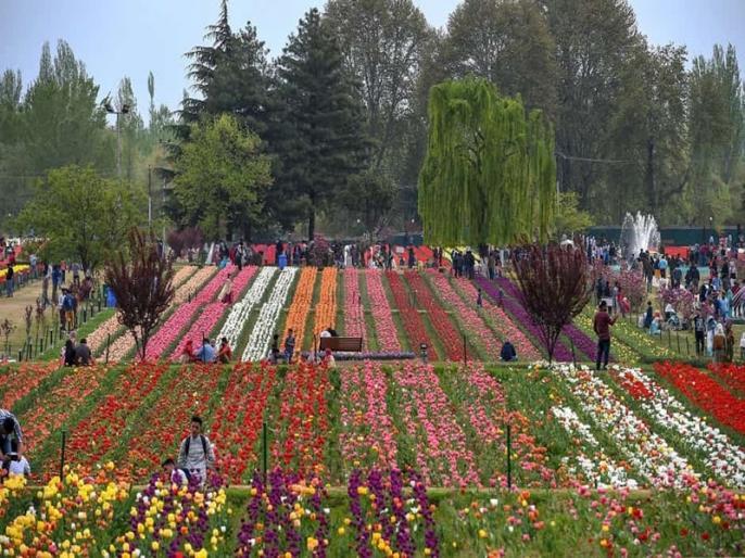 Jammu and Kashmir Asia largest tulip garden to open at end of next month   जम्मू कश्मीर: कोरोना की वापसी के खतरे के बीच अगले महीने के अंत में खुलेगा एशिया का सबसे बड़ा टयूलिप गार्डन?