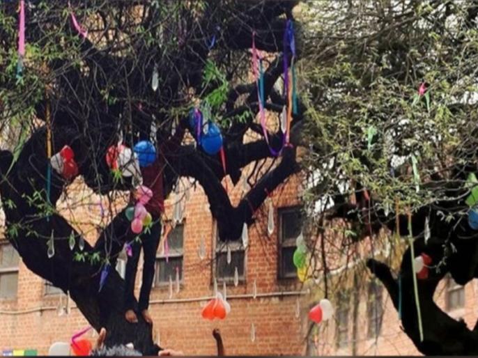 valentines day in delhi university virgin tree of hindu college | BLOG: वो पेड़ जिसकी पूजा से वैलेंटाइन डे पर मिलता है जीवनसाथी