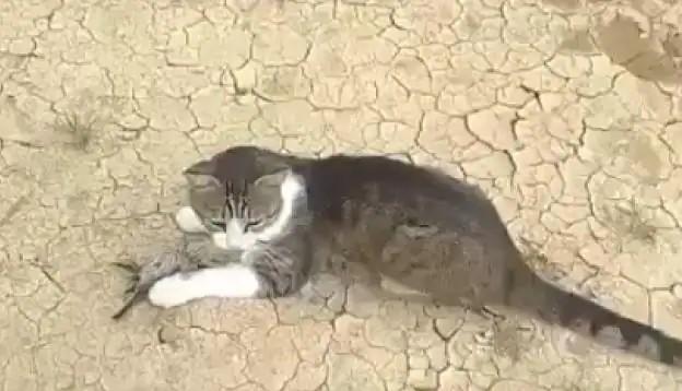 Acting to die, Chidya made cat April Fool, IFS officer shared video, went viral on social media | मरने की एक्टिंग कर चिड़िया ने बिल्ली को बनाया अप्रैल फूल, IFS अधिकारी ने साझा किया वीडियो, सोशल मीडिया पर हुआ वायरल