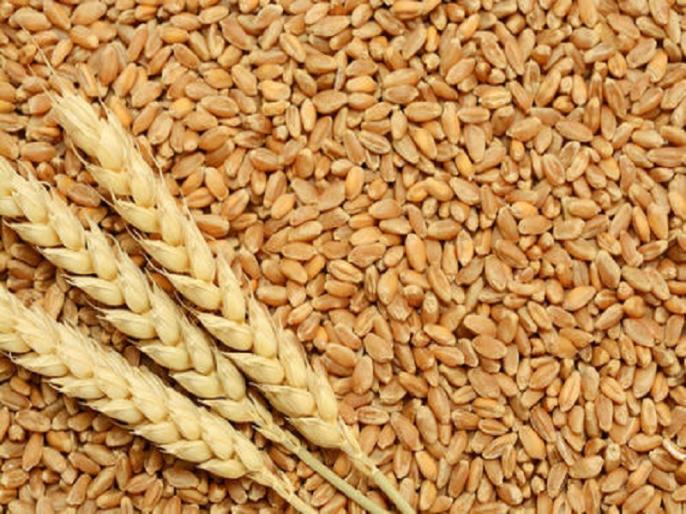 Madhya Pradesh dewas Death of farmer who came to sell crop, was waiting for his turn to sell wheat | Madhya Pradesh:फसल बेचने पहुंचे किसान की मौत,गेहूं बेचने के लिए अपनी बारी का इंतजार कर रहा था