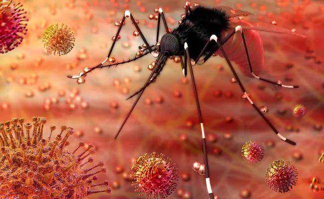 Rajasthan: 50 people have tested positive for Zika virus in Jaipur | जयपुर में जीका वायरस का कहर जारी, 50 तक पहुंची मरीजों की संख्या