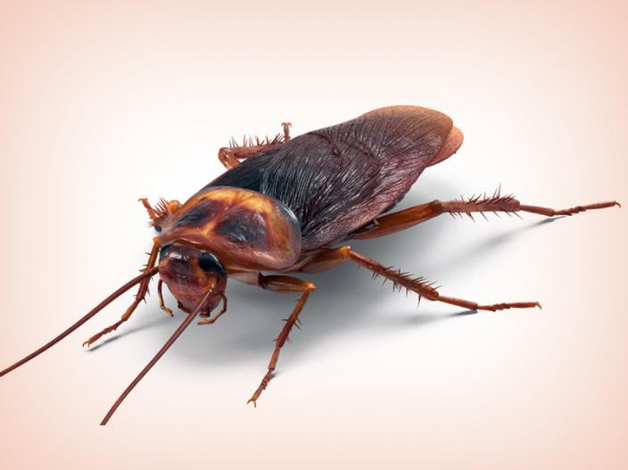 cockroach |