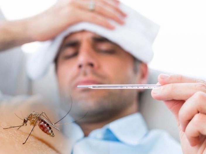 Photos: 5 unknown interesting facts about dengue fever, malaria |
