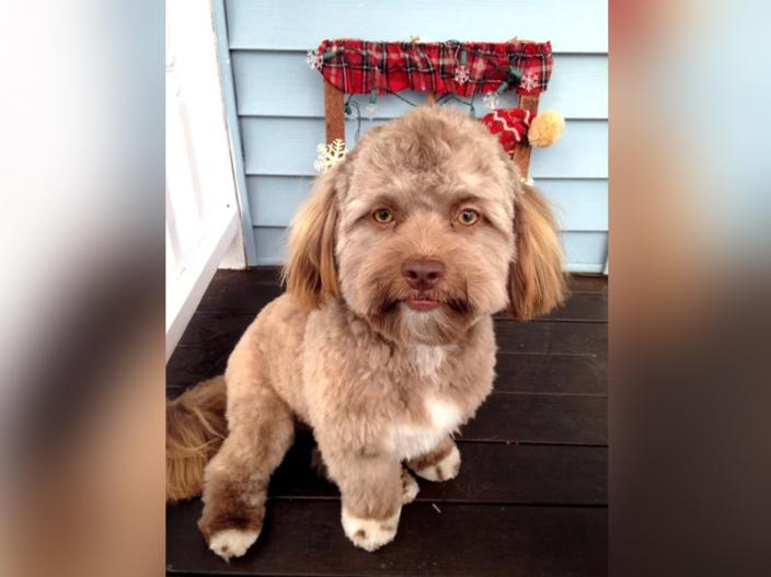 dog face look like human |
